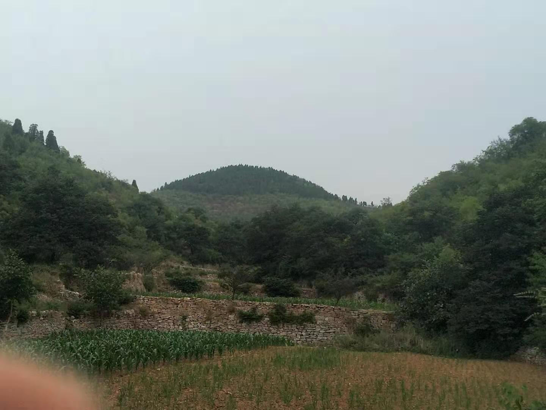 【王宏生】游南峧寺原始森林有感